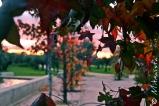 Una ventana el mundo desde esta cueva de hojas. Una ventana al mundo por la que arrojar mi congoja.